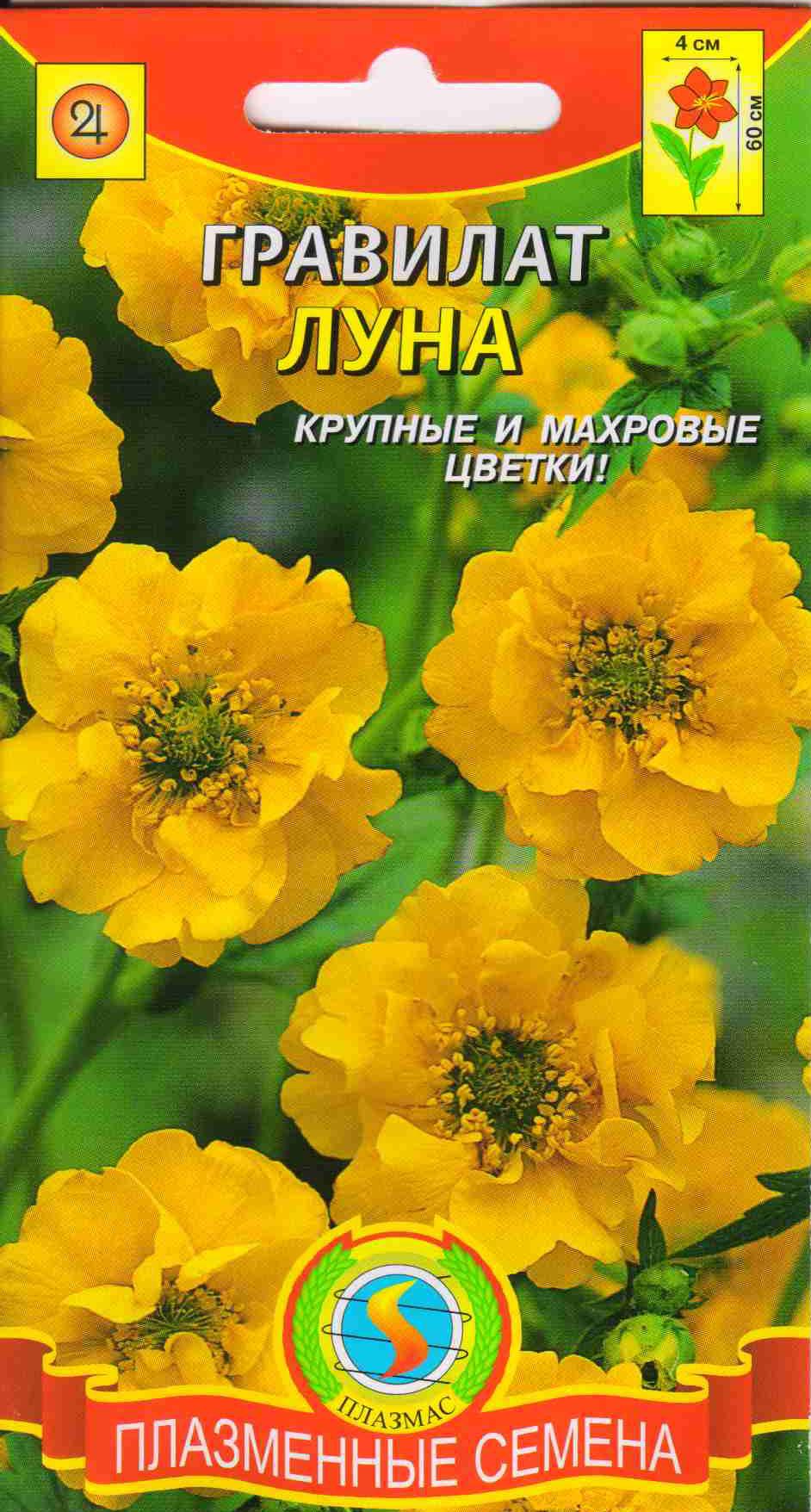 Каталог и описание многолетних цветов фото