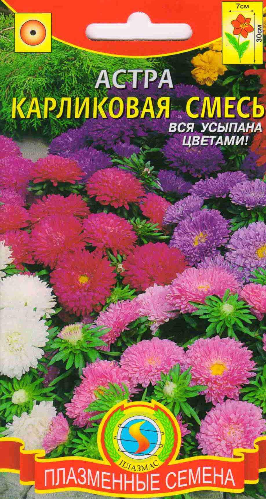 Низкорослые семена цветов фото