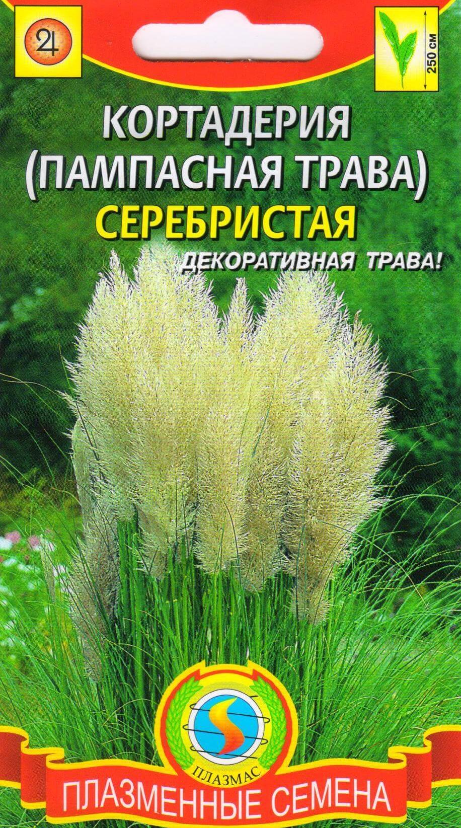 Как сажать семена пампасной травы 71