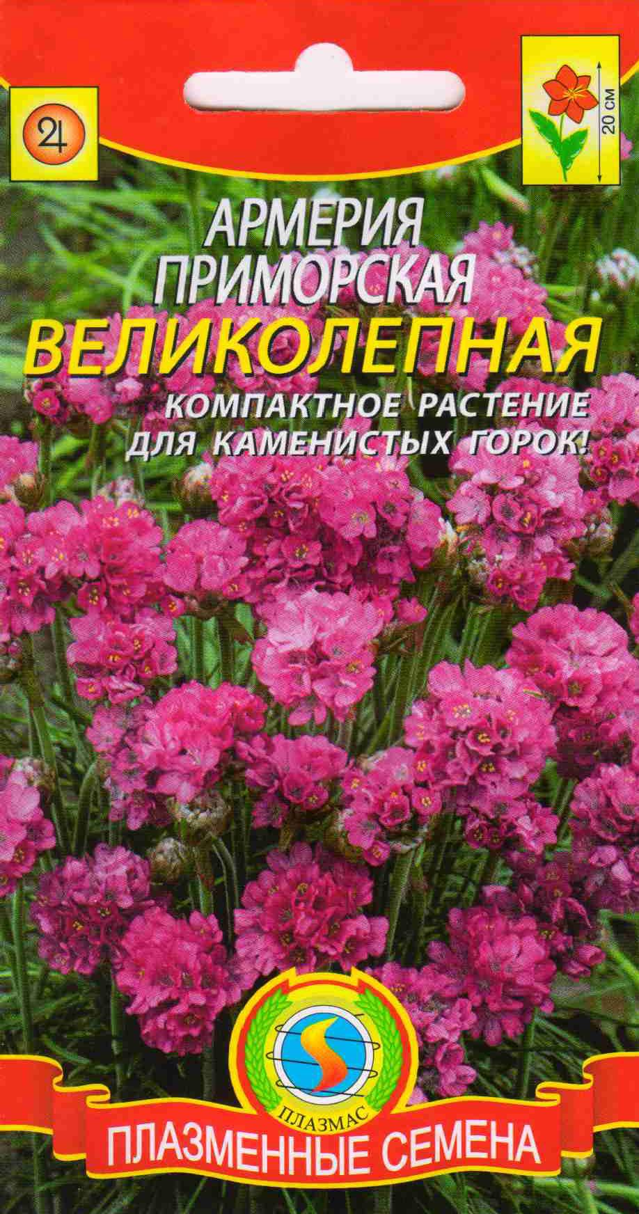 Садовые цветы с и их характеристикой