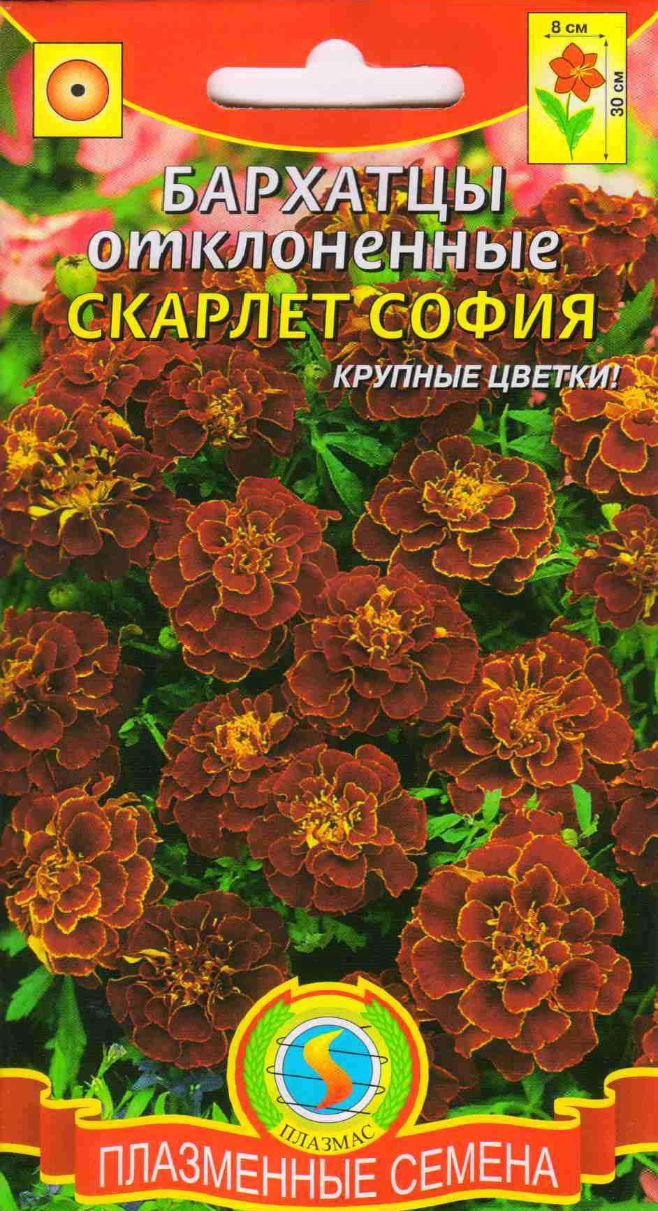 Каталог семян цветов фото и описание