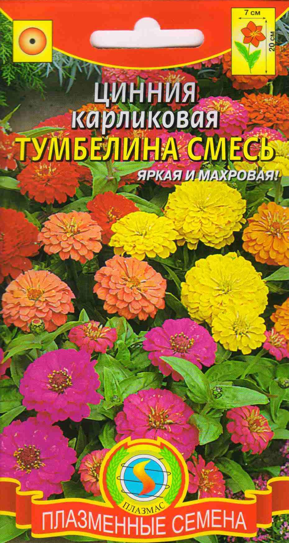 Циния низкорослая цветов